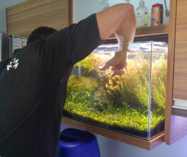 El mantenimiento de un acuario plantado