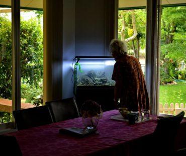 El acuario en el hogar