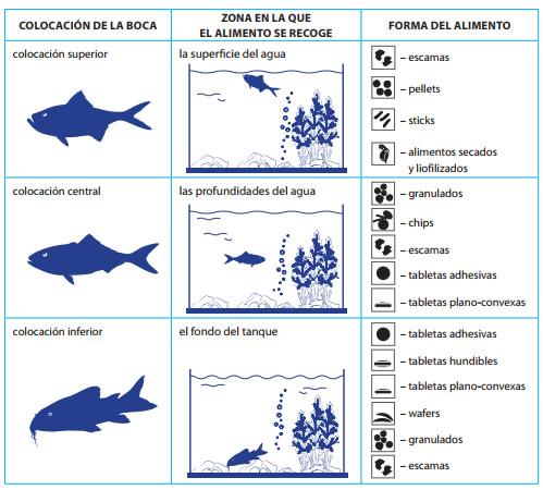 Guia para la alimentaci n de los peces acuarios plantados for Alimentacion para peces de acuario