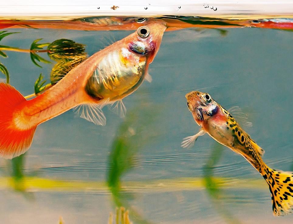 Guia para la alimentación de los peces
